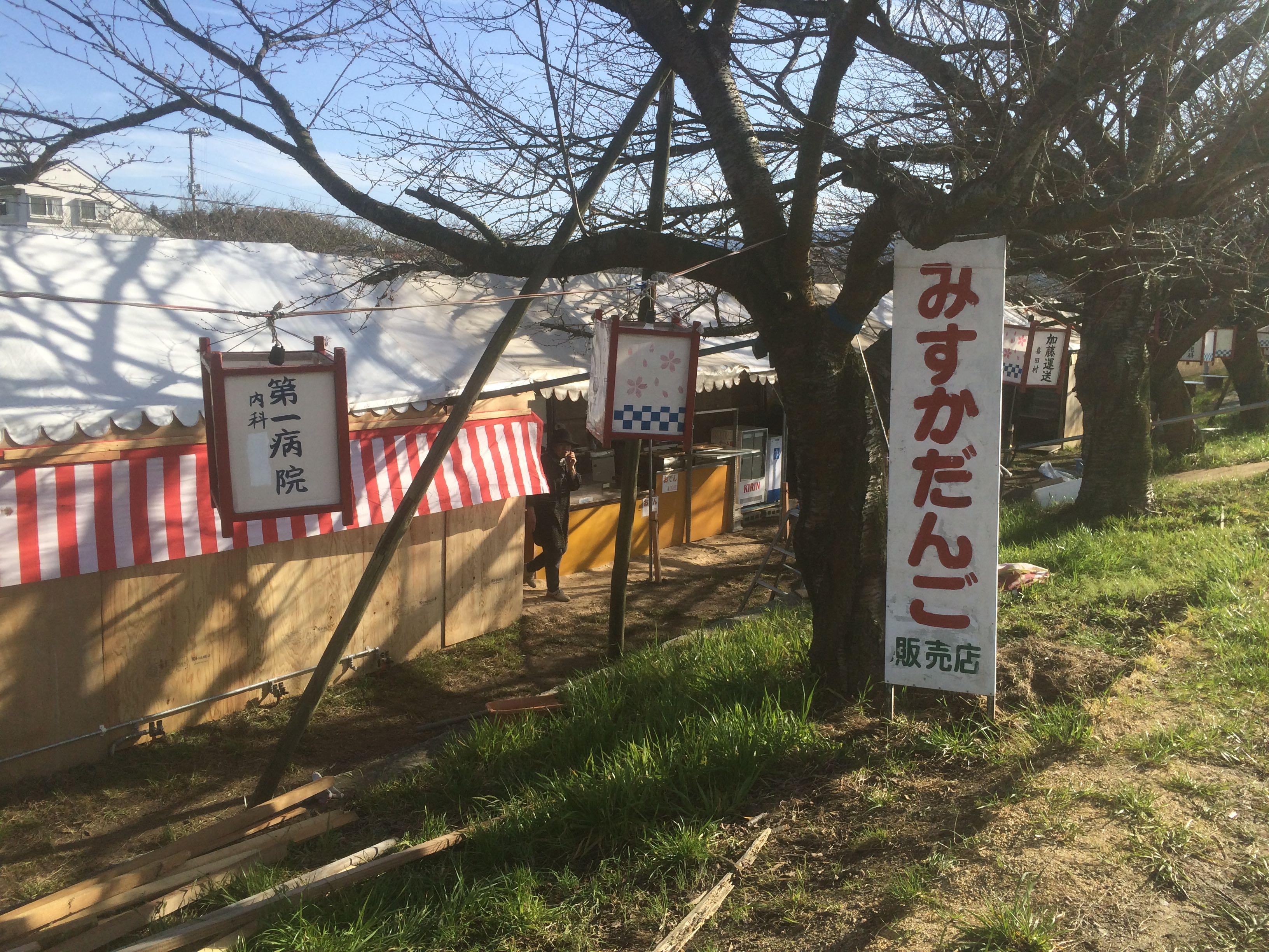 みとん今治,頓田川,桜,富田,ソメイヨシノ
