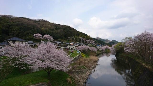 みとん今治,玉川湖畔の里,桜,花見