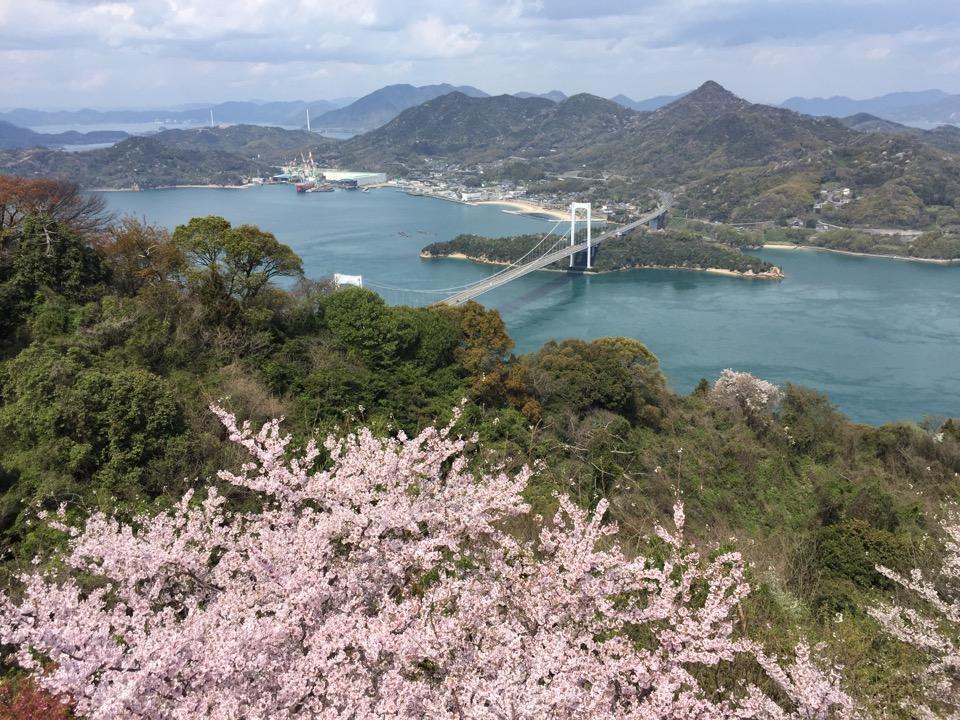みとん今治,能島,花見,桜,離島,しまなみ海道