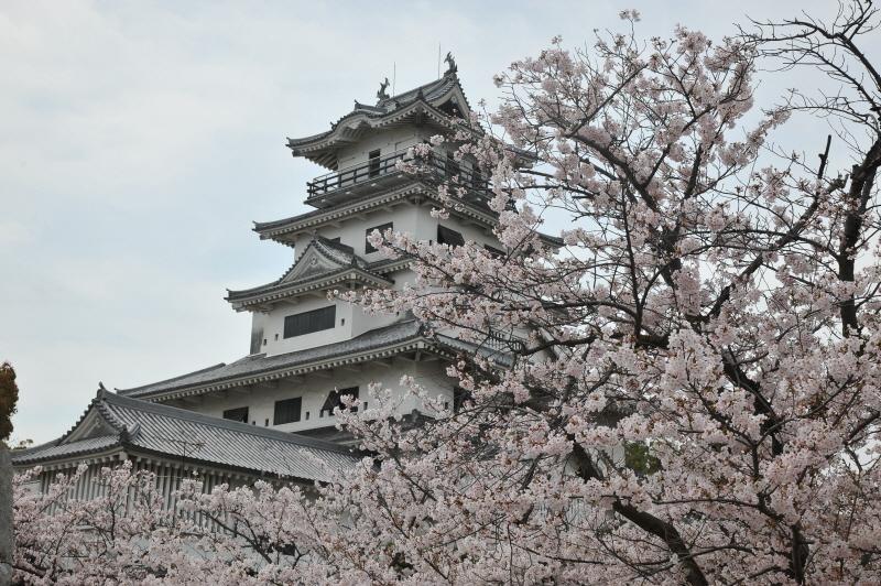 みとん今治,花見,桜,今治城,放水
