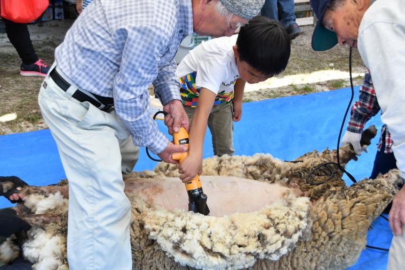 みとん今治,イベント,羊,毛刈り大会,菊間