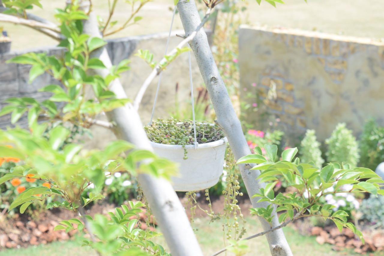 みとん今治,大丸跡地,庭,ガーデン