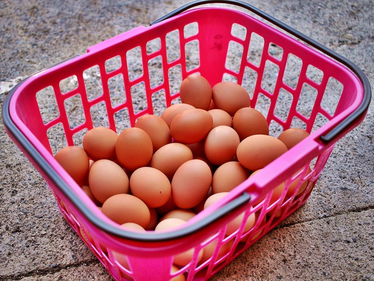 みとん今治,玉川ファーム,卵,農業